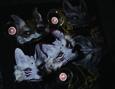 /www.artism.jp/ad_d102_02.jpg