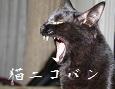 /www.artism.jp/ad_n113_02.jpg