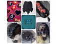 /www.artism.jp/ad_r121_02.jpg